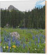 Mount Sneffels Lupine Landscape Wood Print