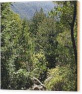 Mount Tamalpais Forest View Wood Print