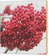 Mountain Ash Berries Wood Print
