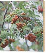 Mountain Ash Berries Wood Print
