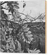 Mountain Ash - Fairbanks Alaska - Monochrome Wood Print