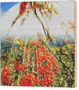 Mountain Ash Sunshine Wood Print