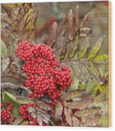 Mountain Ash With Berries Wood Print