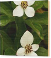 Mountain Berries Wood Print