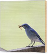 Mountain Blue Bird Wood Print