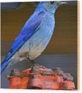 Mountain Blue Bird Wood Print