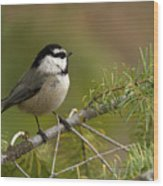 Mountain Chickadee Wood Print by Beve Brown-Clark Photography