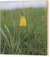 Mountain Flower 2 Wood Print