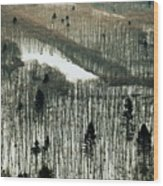 Mountain Forest Wood Print