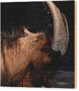 Mountain Goat Wood Print