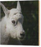 Mountain Goat Kid Portrait Wood Print