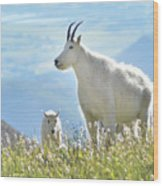 Mountain Goat Momma And Kid Wood Print