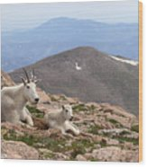 Mountain Goat Mother And Kid In Mountain Home Wood Print