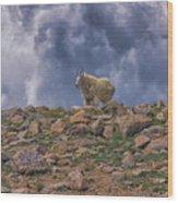 Mountain Goat Overlook Wood Print