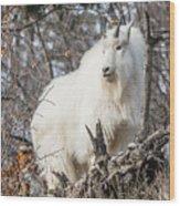 Mountain Goat Pride Wood Print