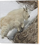 Mountain Goat With Grace Wood Print