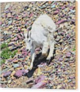 Mountain Goat3 Wood Print