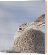 Mountain Hare - Scottish Highlands  #10 Wood Print