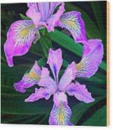 Mountain Iris In Flower California Wood Print