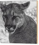 Mountain Lion Bw Wood Print