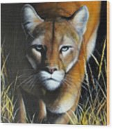 Mountain Lion In Tall Grass Wood Print