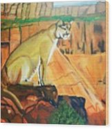 Mountain Lion In Thought Wood Print