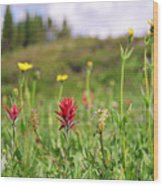 Mountain Meadow Abstract Wood Print