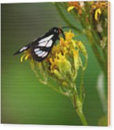 Mountain Moth Wood Print