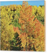 Mountain Of Color In Dillon Colorado Wood Print