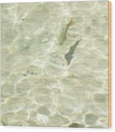 Mountain Stream Trout Wood Print