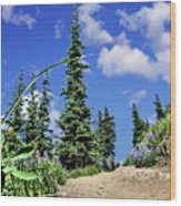 Mountain Trail - Olympic National Park Wood Print