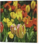 Mountain Tulips Wood Print