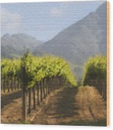 Mountain Vineyard Wood Print