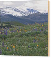Mountain Wildfowers Wood Print