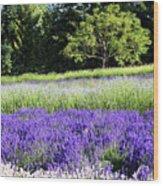 Mountainside Lavender Farm Wood Print