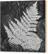 Mounts Botanical Garden 2365 Wood Print