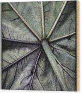 Mounts Botanical Gardens 2360 Wood Print