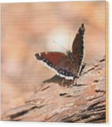 Mourning Cloak Butterfly Wood Print