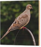 Good Morning Mourning Dove  Wood Print