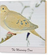 Mourning Dove In Snow Animal Portrait Wood Print