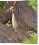 Mourning Dove On The Hillside Wood Print