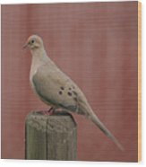Mourning Dove Sitting Pretty Wood Print