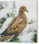 Mourning Dove Square Wood Print