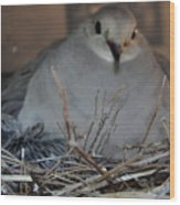 Mourning Dove With One Of Two Chicks Wood Print