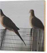 Mourning Doves Calverton New York Wood Print