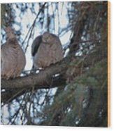 Mourning Doves Wood Print