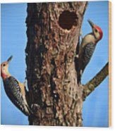 Red Bellied Woodpeckers Wood Print
