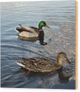 Mr And Mrs Duck On Parade Wood Print