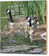 Mr And Mrs Goose And Family Wood Print