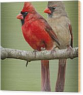 Mr. And Mrs. Northern Cardinal Wood Print by Bonnie Barry